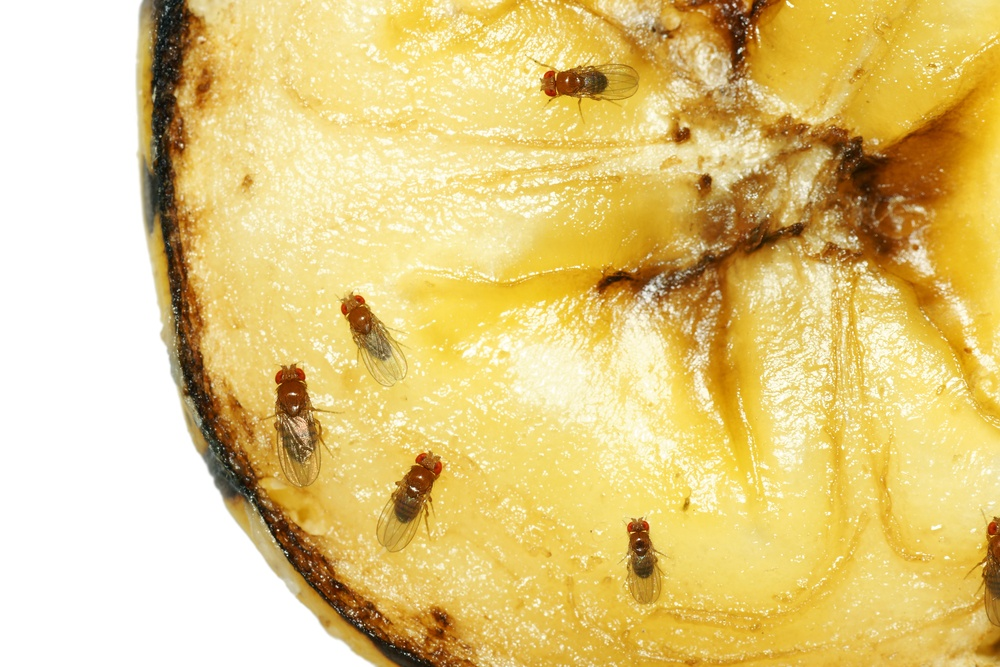 7 Asian household pests and how to get rid of them naturally